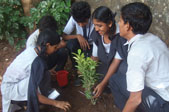 til-mumbai-teams-green-efforts-on-world-environment-day-thumb