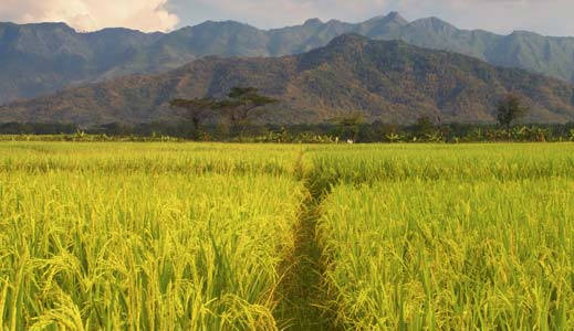 Agri-business-contributes-to-World-Bank-report