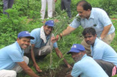 dewas-tree-plantation-thumb